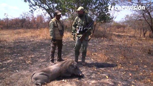 Dos búfalos y muchas más especies en ...