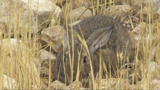Conejos de Criptana