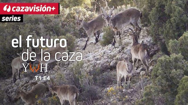 Gestión de hembras en Teruel
