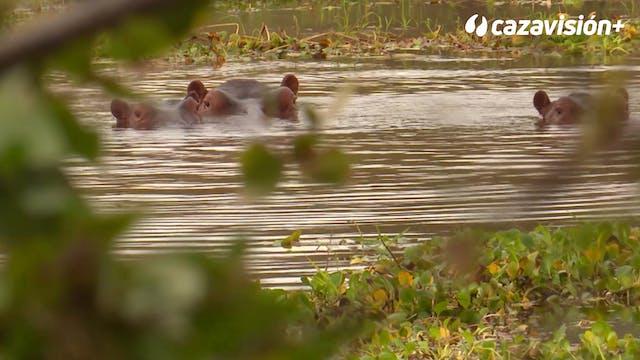 Safari de caza peligrosa en Zimbabwe
