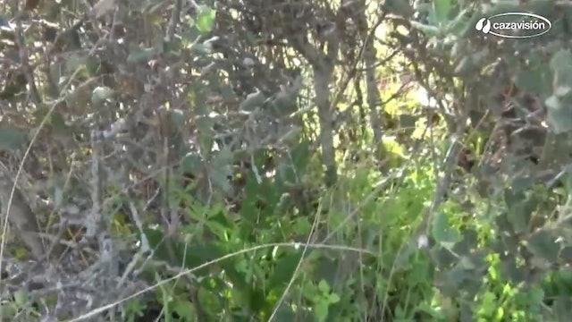 De caza con cetreros