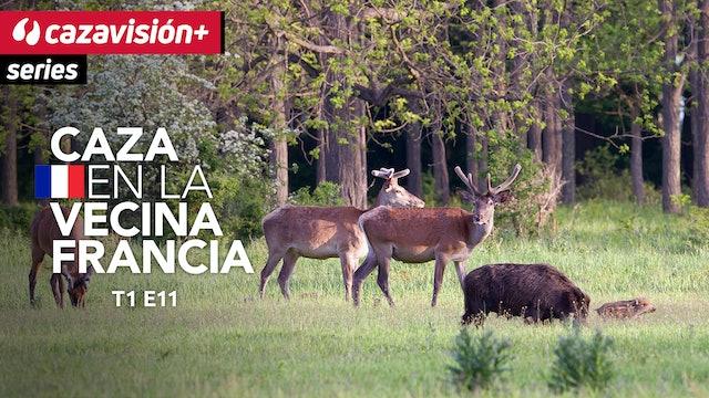 De caza menor y mayor en Languedoc Roussillon
