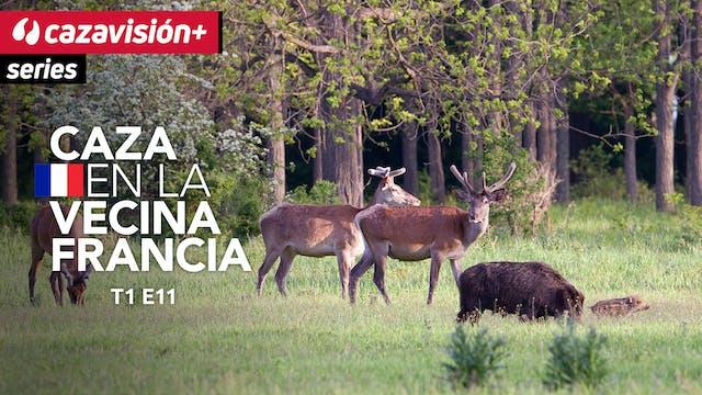 De caza menor y mayor en Languedoc Ro...