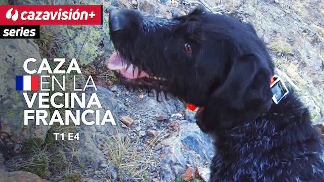 En busca de las perdices, con perros de muestra, en alta montaña