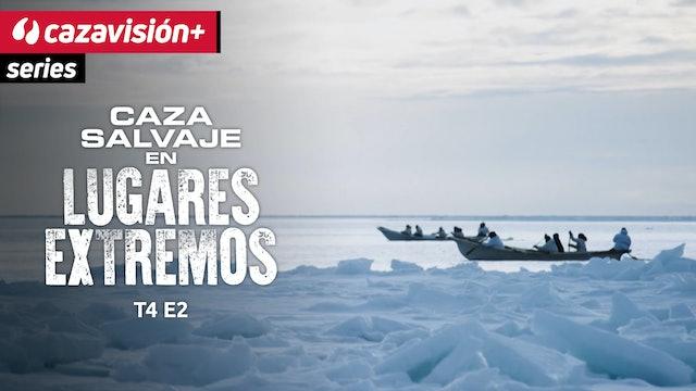En barcas y con arpones, tras las ballenas boreales