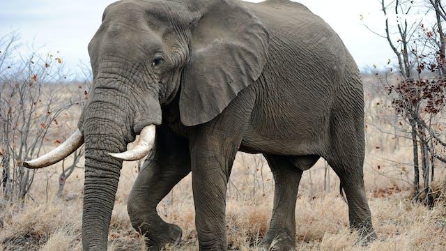 Safari de elefante y antílopes
