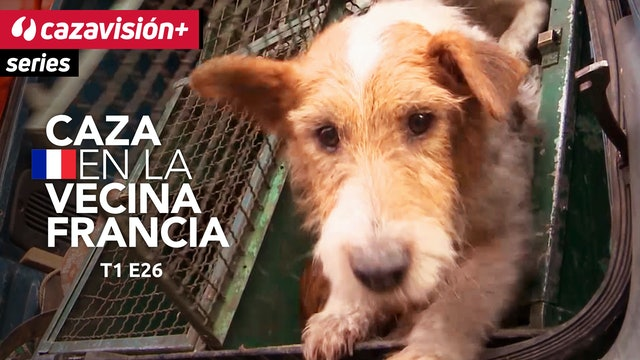 Negro y rojo: rastreos con perros de sangre en batidas francesas