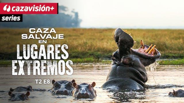 Hipopótamo, una caza muy, muy peligrosa