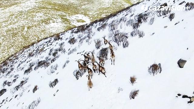Recechando en las nevadas cumbre de Gredos