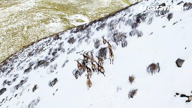 Recechando en las nevadas cumbre de G...