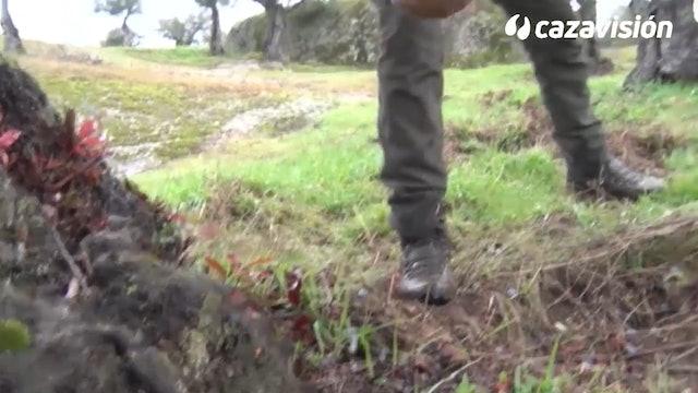 Zorzales en la frontera con Portugal