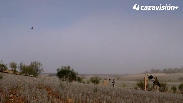 Tradicionales ojeos de perdices en los montes de Toledo