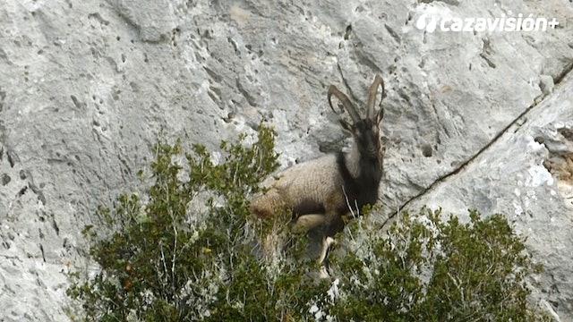 En busca del íbex kri kri en Grecia