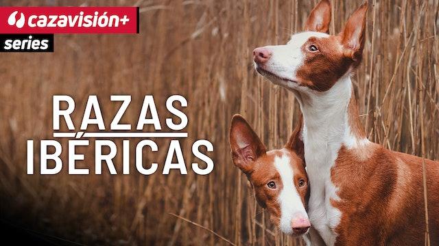 Razas Ibéricas