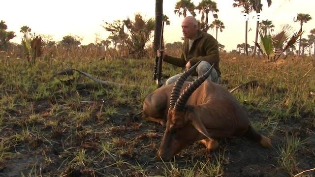 A búfalos en Tanzania