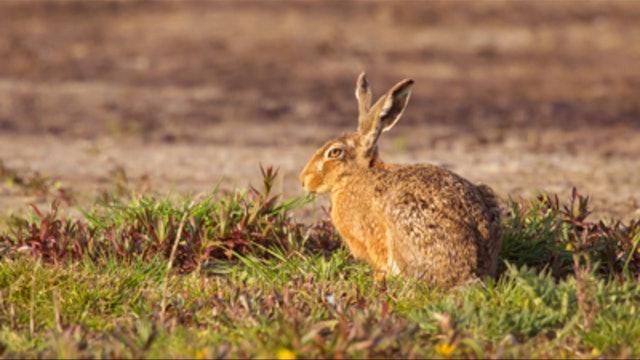 Los conejos de Villahermosa