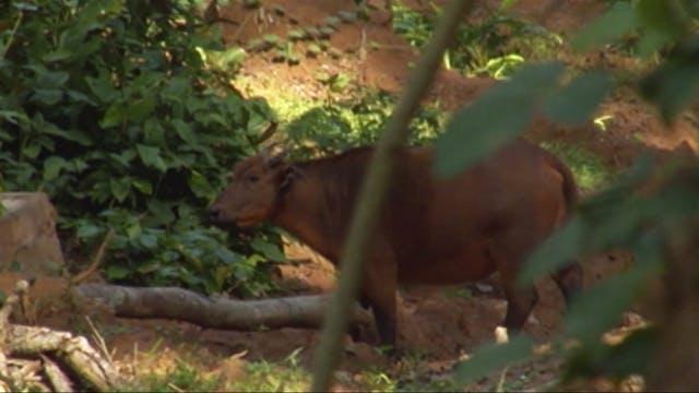 Safari en las junglas del Congo