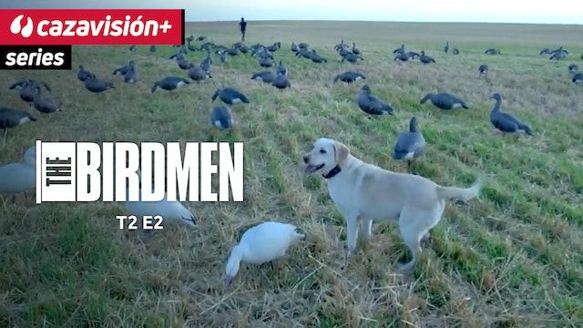 Caza de patos y gansos en cultivos y humedales
