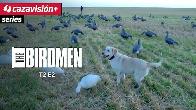 Caza de patos y gansos en cultivos y ...
