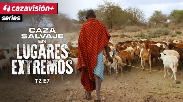 Búfalos agresivos en tierra de los masái