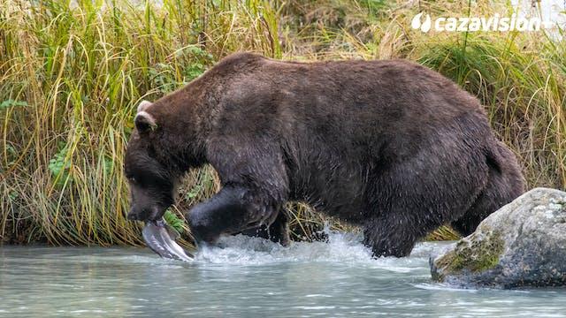 Tras osos y alces en la fría Kamchatka