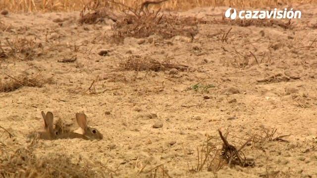 Descaste en La Mancha