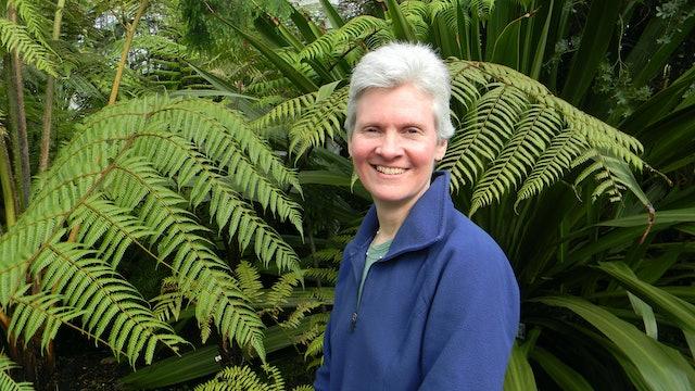 15th June Classroom Resource: Lynn Rickards, Willow The Wildcat Maze