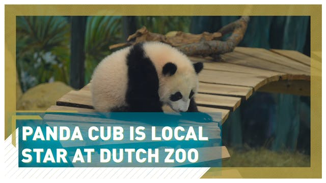 Panda cub stars on public debut at Du...