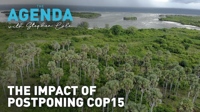 The impact of postponing COP15 - The ...
