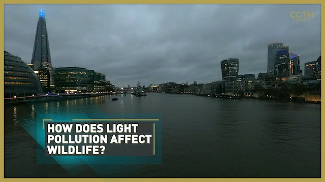 Assessing urban light pollution's worrying impact on the natural world