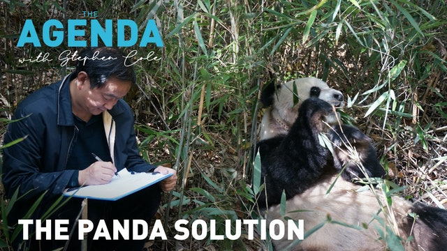 The panda solution: The Agenda
