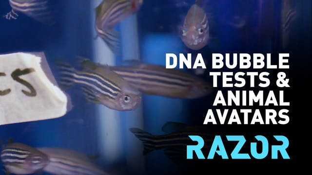 DNA bubble tests and animal avatars -...