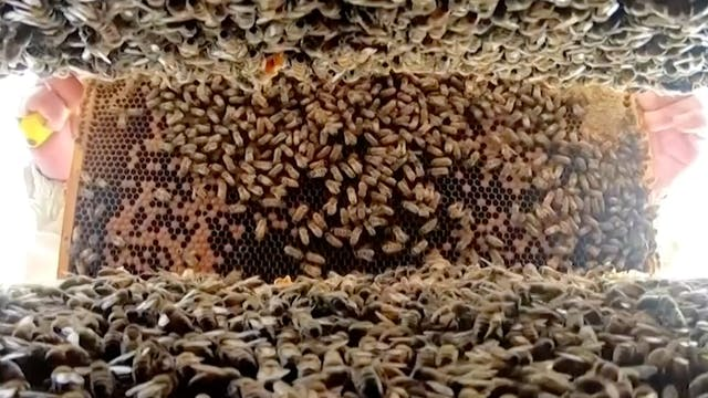 Drought affecting bee colony