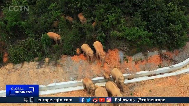 Herd of elephants' mystery 400 km hik...