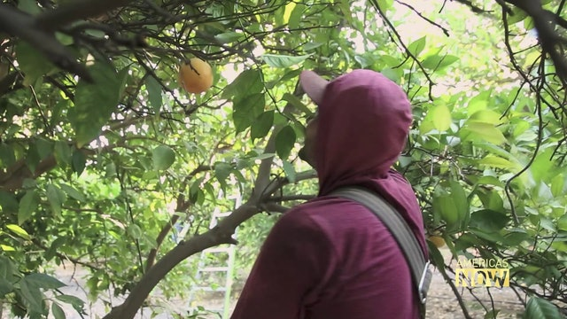 Migrant Farm Workers in California Lack Safe Drinking Water