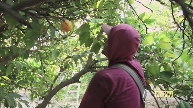 Migrant Farm Workers in California La...