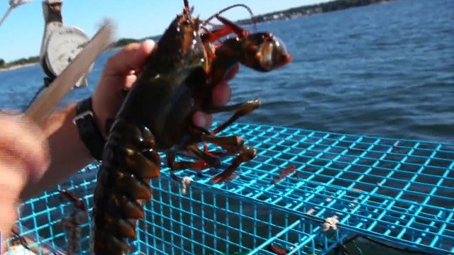 U.S.-China trade war is hitting Maine's lobster industry