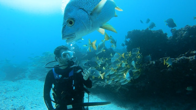 Vaccination in the Galapagos Islands will bring back Tourism