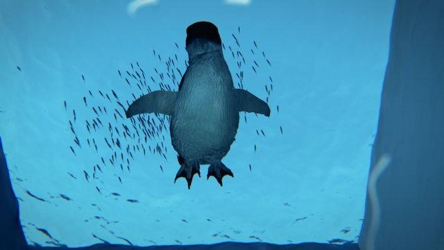 Going fishing - What do little penguins eat? - #RAZOR