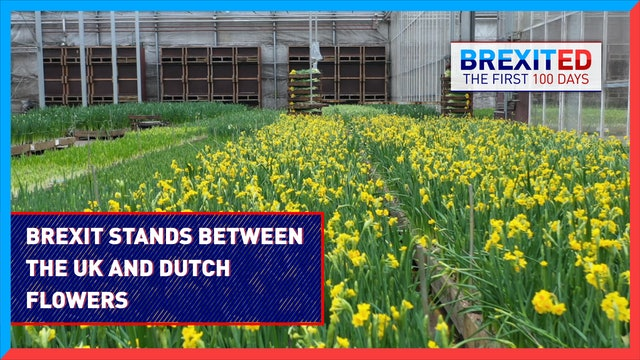 How Brexit stands between the UK and Dutch flowers - #BREXITED
