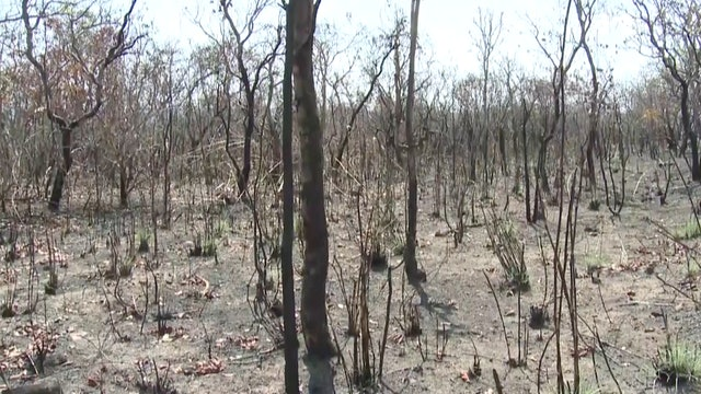 Chinese companies in Brazil fight deforestation