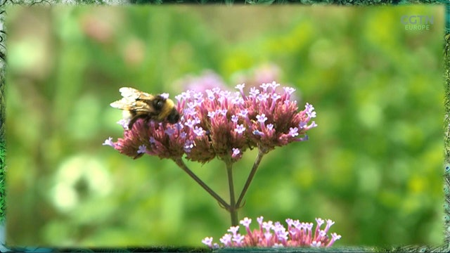 Bavaria's historic move to save biodiversity and the bees