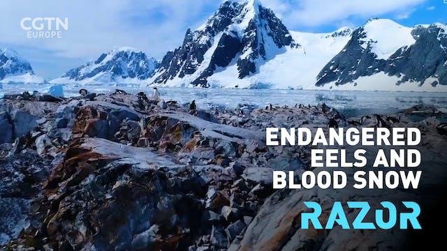 Endangered eels and blood snow: #RAZO...