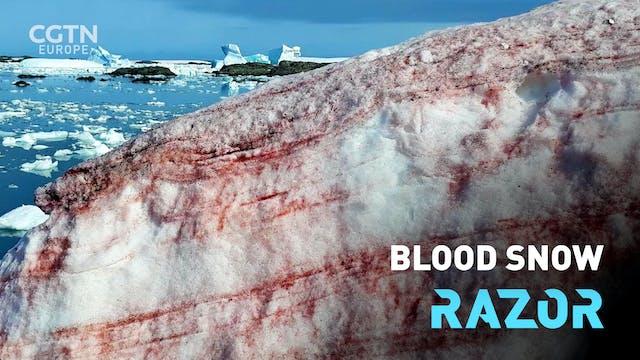Blood snow #RAZOR