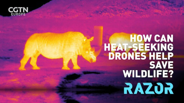 #RAZOR: How can heat-seeking drones help save wildlife?