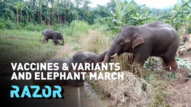 Vaccines and variants and elephant march #RAZOR