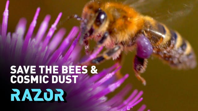 Free the bees - Creating a network of...