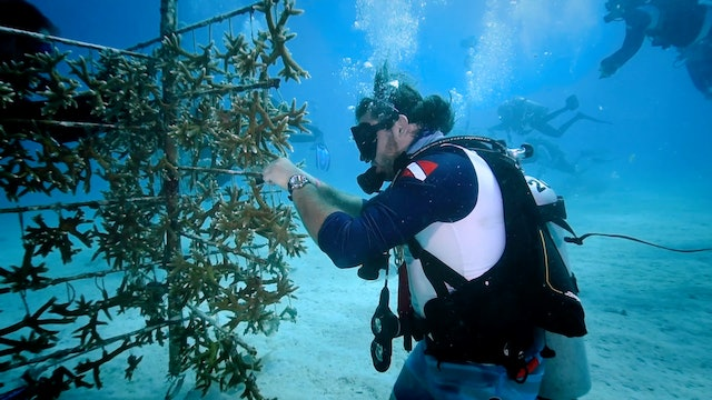Florida Scientists Breed Coral To Restore The Damaged Reef