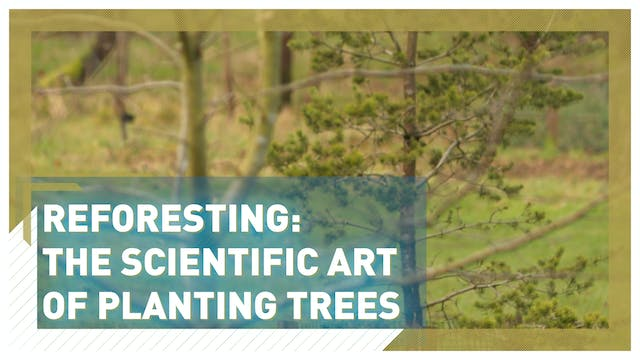 Reforesting: the scientific art of pl...