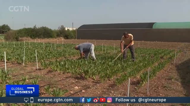 Olive farmers and scientists come tog...